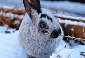 How Rabbit Farming Differs in the Winter