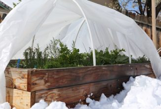 How to Keep Plants from Freezing in Vegetable Gardens