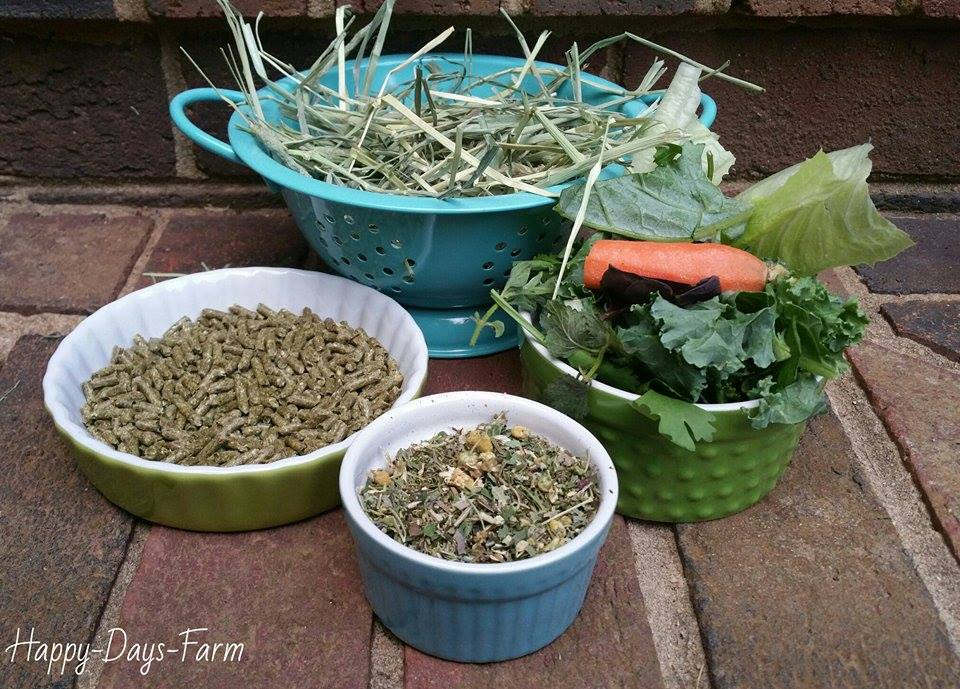 what-herbs-can-rabbits-eat