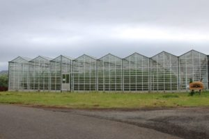 how-greenhouses-work