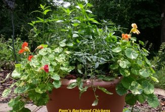 5 Tips for Successfully Planting Herbs in Pots