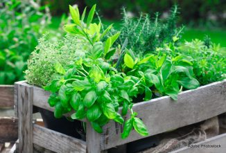 When to Add Perlite Soil to Container Gardens