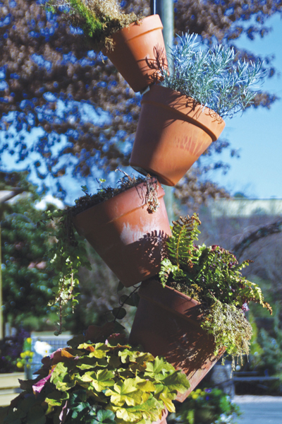 how-to-take-care-of-plants-in-pots
