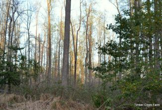 Selective Cutting and Sustainable Forestry Plans