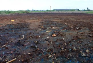 Phytoremediation Plants Used to Clean Contaminated Soil
