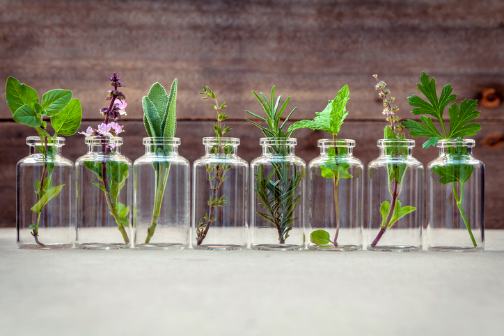 Hydrosol vs. Essential Oil: Practical Aromatherapy in the Home
