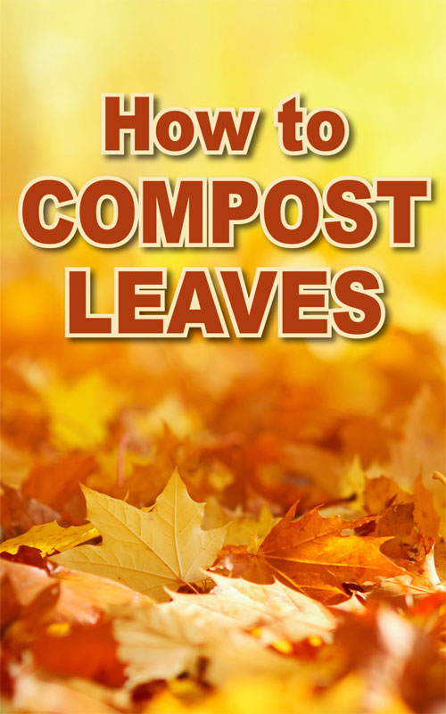 Compost Leaves