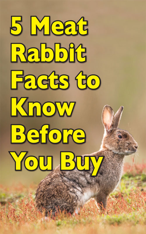 Meat Rabbit Facts