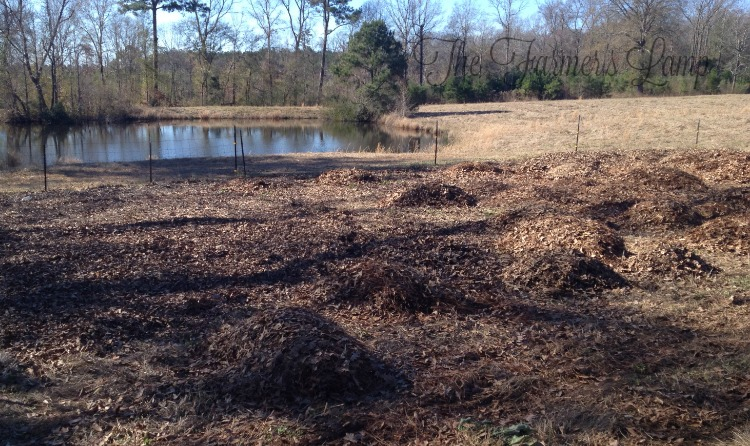 how-to-lay-mulch