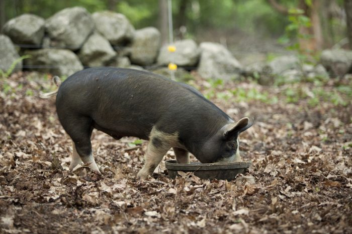 Tools for a Successful Electric Pig Fence