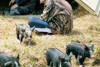 Raising Piglets: Ensuring Your Little Ones Are Born Safely