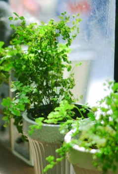 watering-plants-while-away