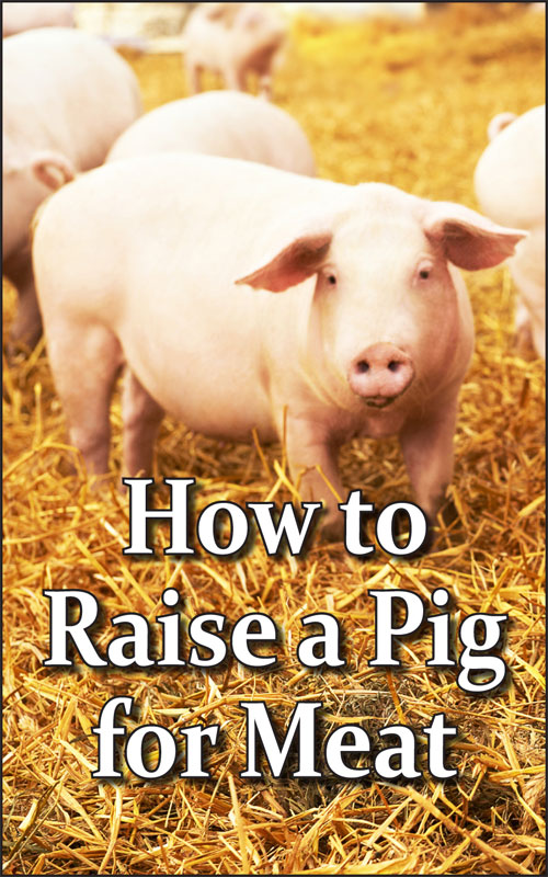 Raise a Pig for Meat