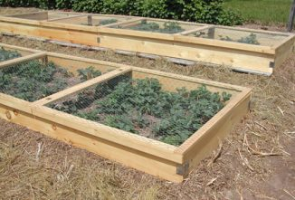 Building Planter Boxes for Strawberries