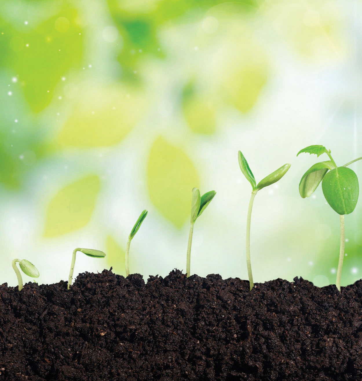 Bring Back Life to Your Soil with Organic Gardening