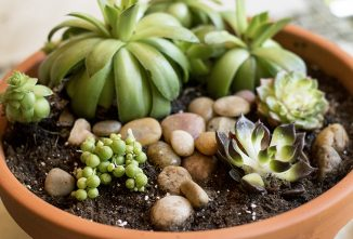 Container Gardening with Succulents: Soil and Care Needed