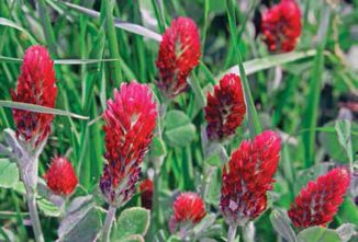 Winter Cover Crops And Green Manure Strategies