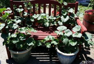 A Guide to Growing Vegetables in Pots and Containers
