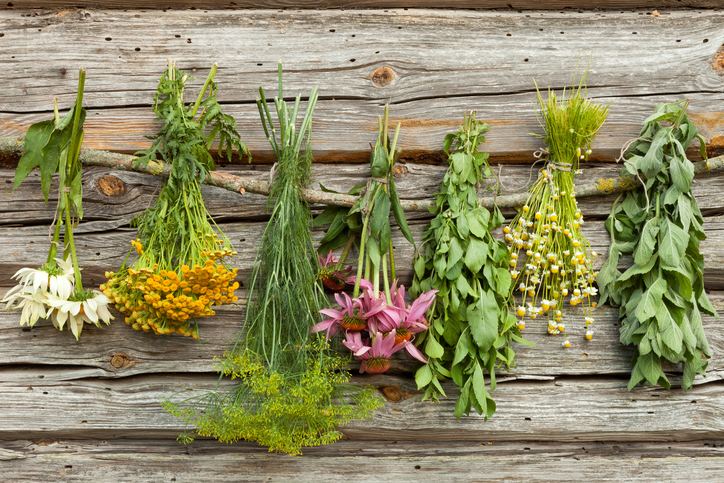 From Fresh Herbs to Dried Teas