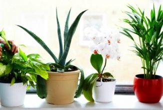The 6 Best Houseplants for Clean Air Indoors