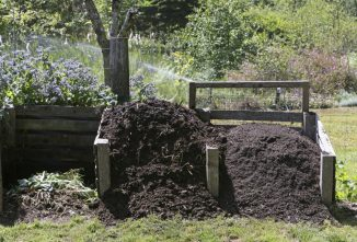A Complete Guide to How to Compost at Home