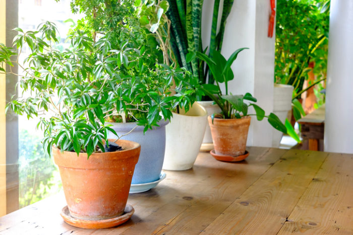 4 DIY Ideas for Watering Plants While Away