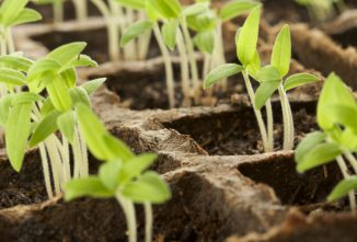 Growing Seedlings Indoors: What's the Problem?