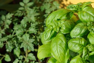The Joys and Challenges of Growing Herbs Outdoors