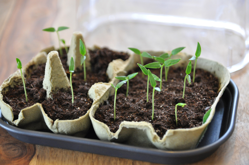 Tips for Germinating Seeds Indoors