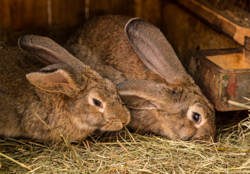 How to Build Your Own Rabbit Hutch (Diagrams)
