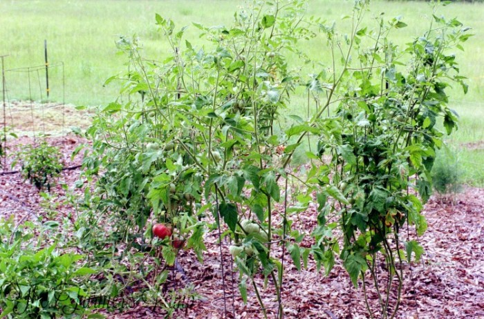 Improve Your Soil: Know How To Lay Mulch