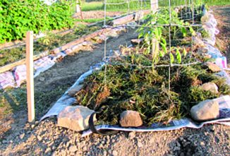 Heavily Mulched, No-Weed Gardening Saves Water