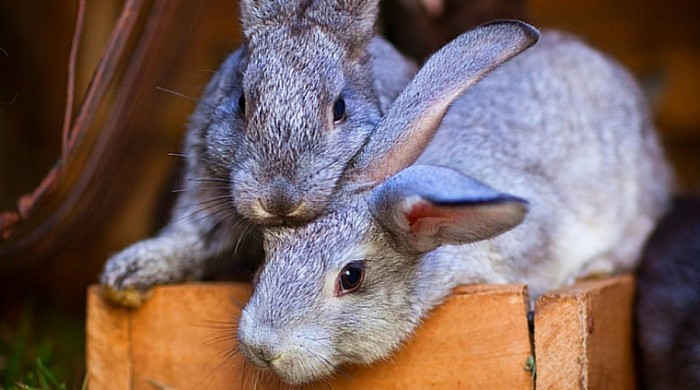 Rabbit Cages or Colonies: Which is Better?
