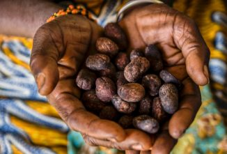 How to Make Shea Butter Traditionally