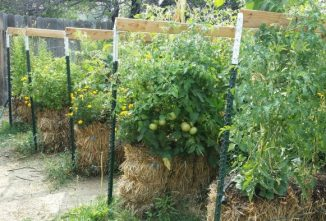Straw Bale Gardening Instructions and How it Works