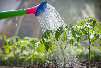 Special Section — The Country Water Supply; Using Grey Water in the Garden