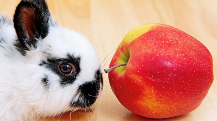 What Fruits Can Rabbits Eat?