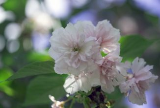 Natural Pest Control for Gardens and Orchards