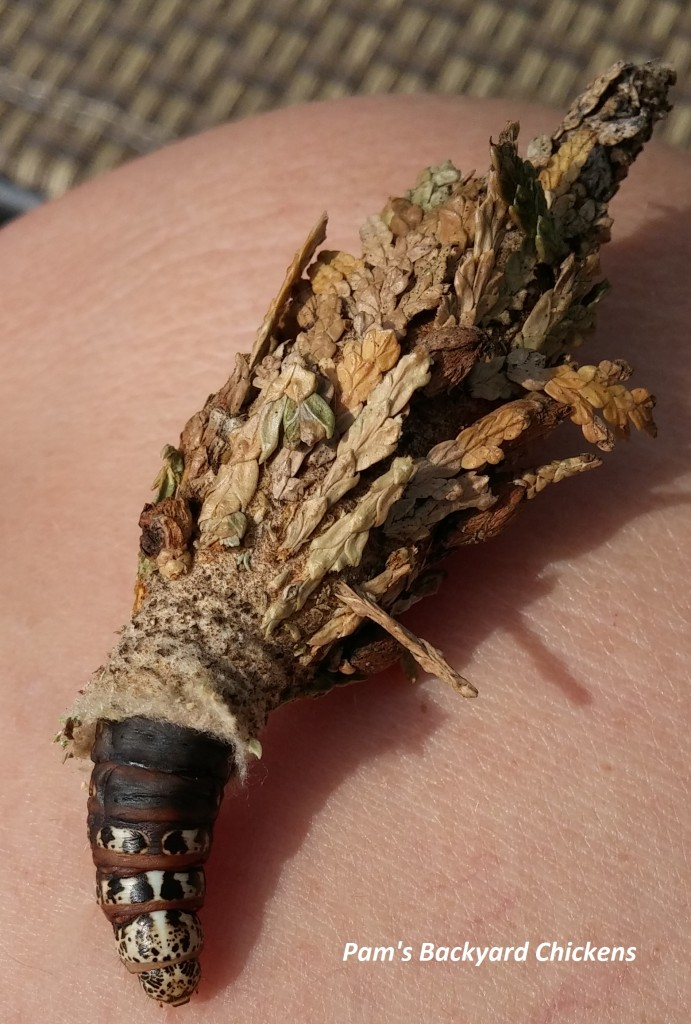 how-to-get-rid-of-bagworms