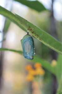 identifying-insects