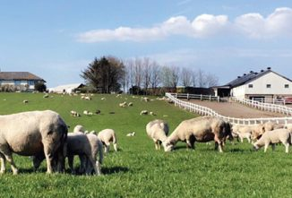 Bigger Lambs, Without Drugs & Drudgery