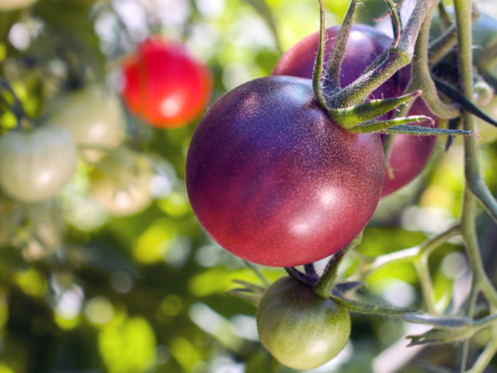what-are-heirloom-tomatoes