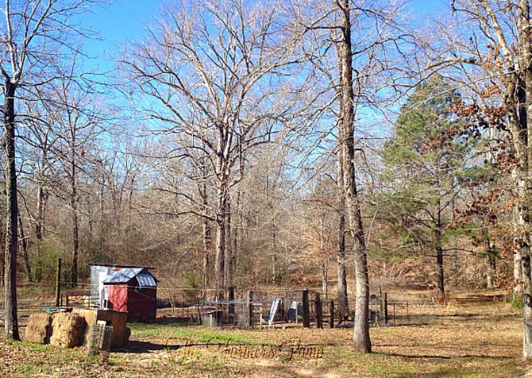 Homesteading Tips for Self-Sufficient Farm Living