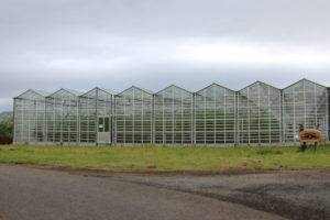 Sólheimar's greenhouse producing cucumbers, tomatoes and ornamental flowers.