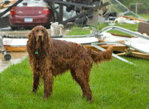 Include Pets In Home Evacuation Plan