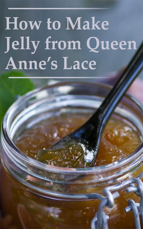 Jelly From Queen Anne's Lace