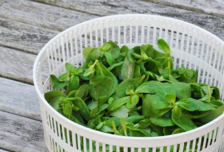 Purslane: Benefits of an Annoying Weed