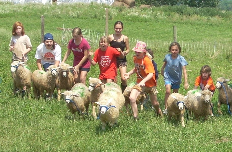 Kids and Coopworths: Sheep Camp at Owens Farm