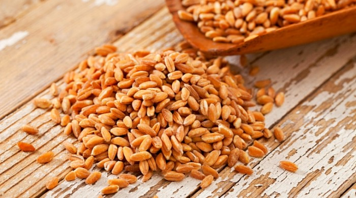 When to Plant Winter Wheat to Harvest Your Own Chicken Feed
