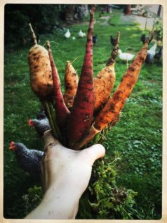 how-to-grow-carrots